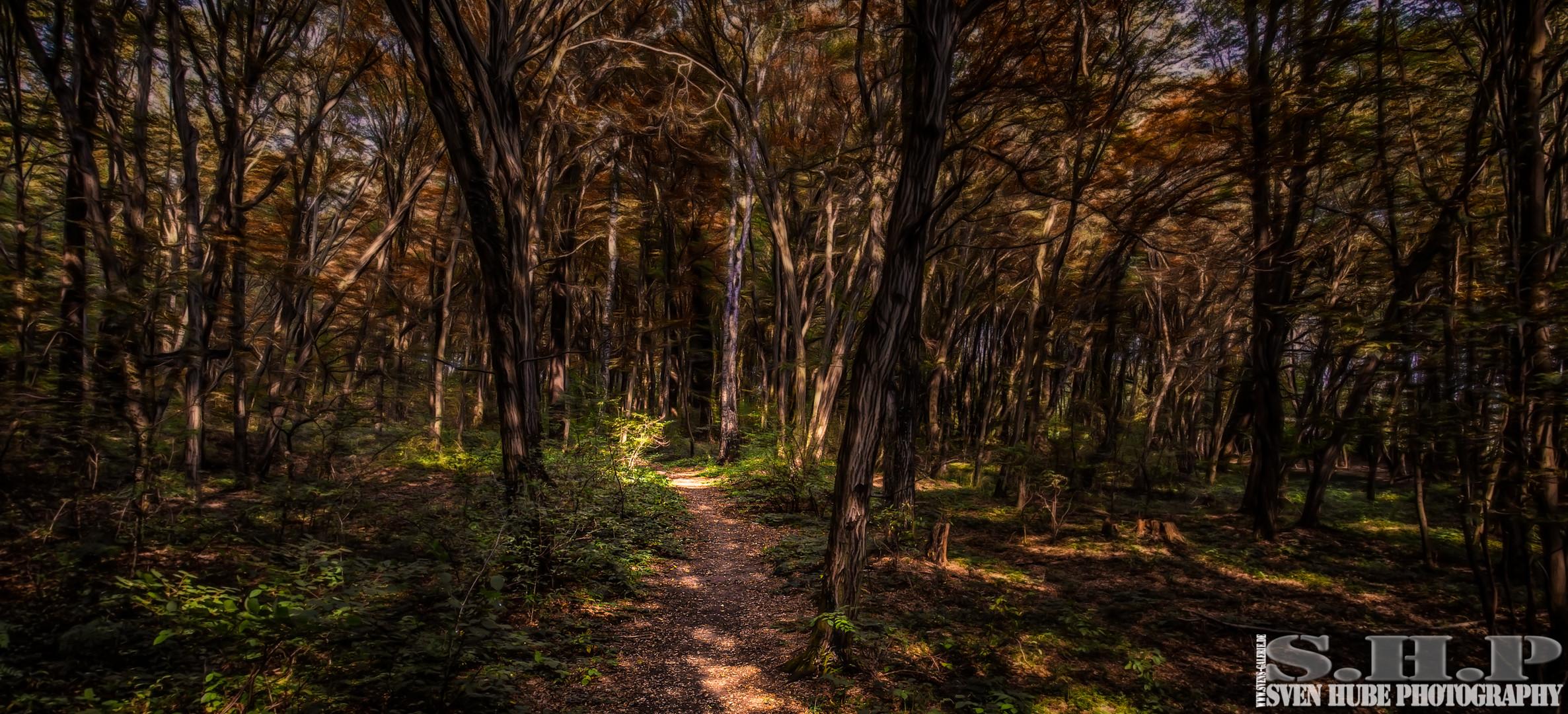 Der Wald weg