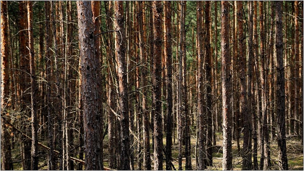 ... der Wald wird dichter ...