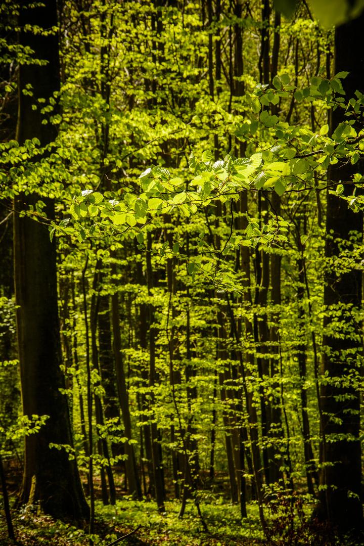 Der Wald wird wieder grün ...