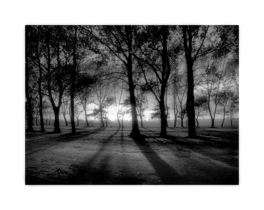 der Wald wirft seinen Schatten...