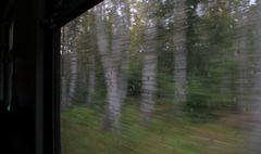 Der Wald zieht vorbei