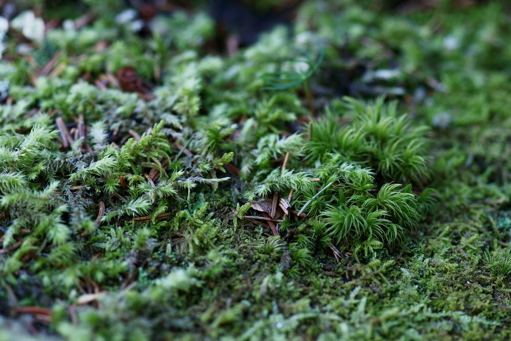 Der Waldboden