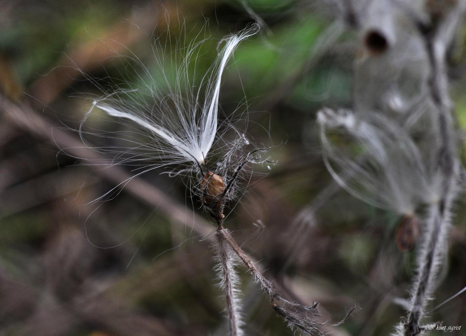 Der Waldelfen feines Haar