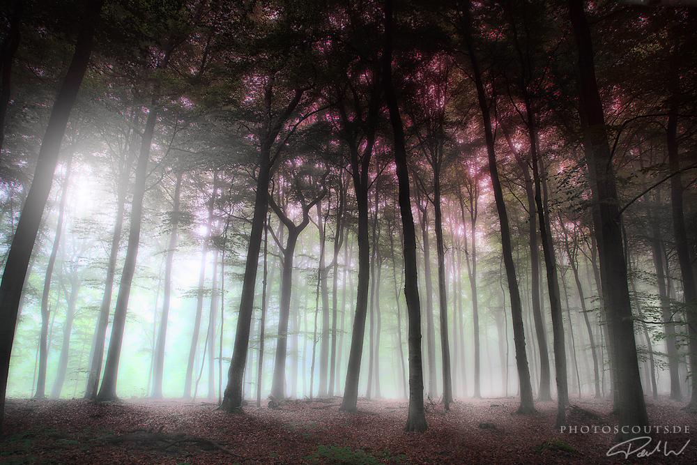 Der Waldfrieden