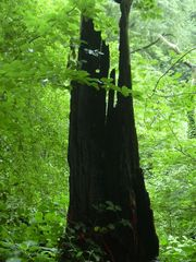 Der Waldgeist