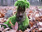 der Waldschrat