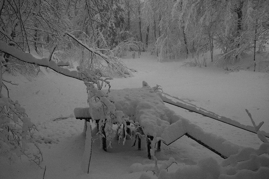 Der Waldteich im Winter