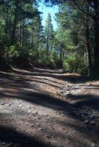 Der Waldweg