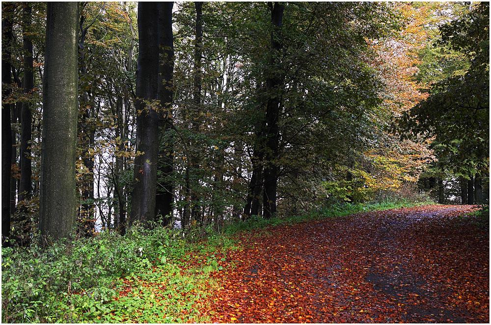 Der Waldweg ...