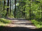Der Waldweg wo die Natur so richtig zu spüren ist
