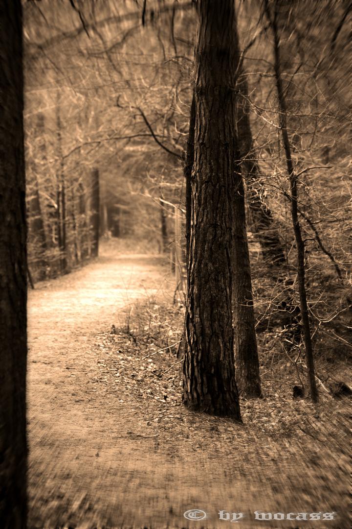 Der Wanderweg