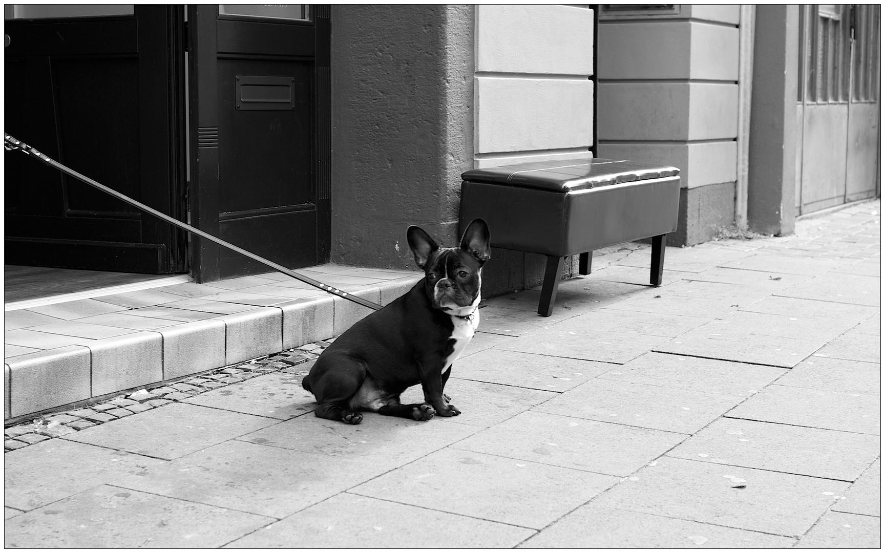 Der wartende Hund