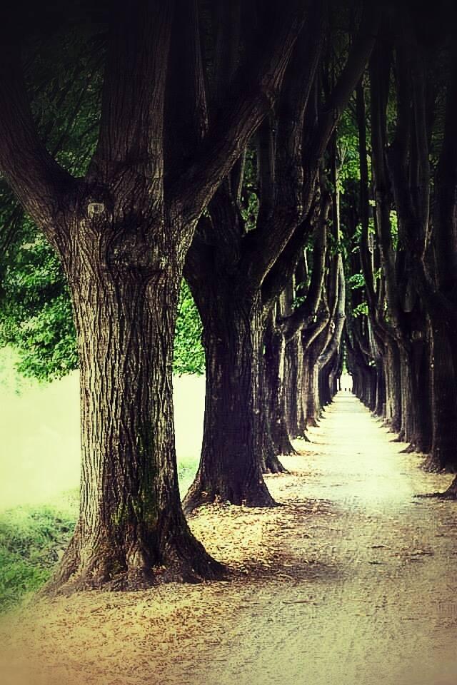 Der Weg.......