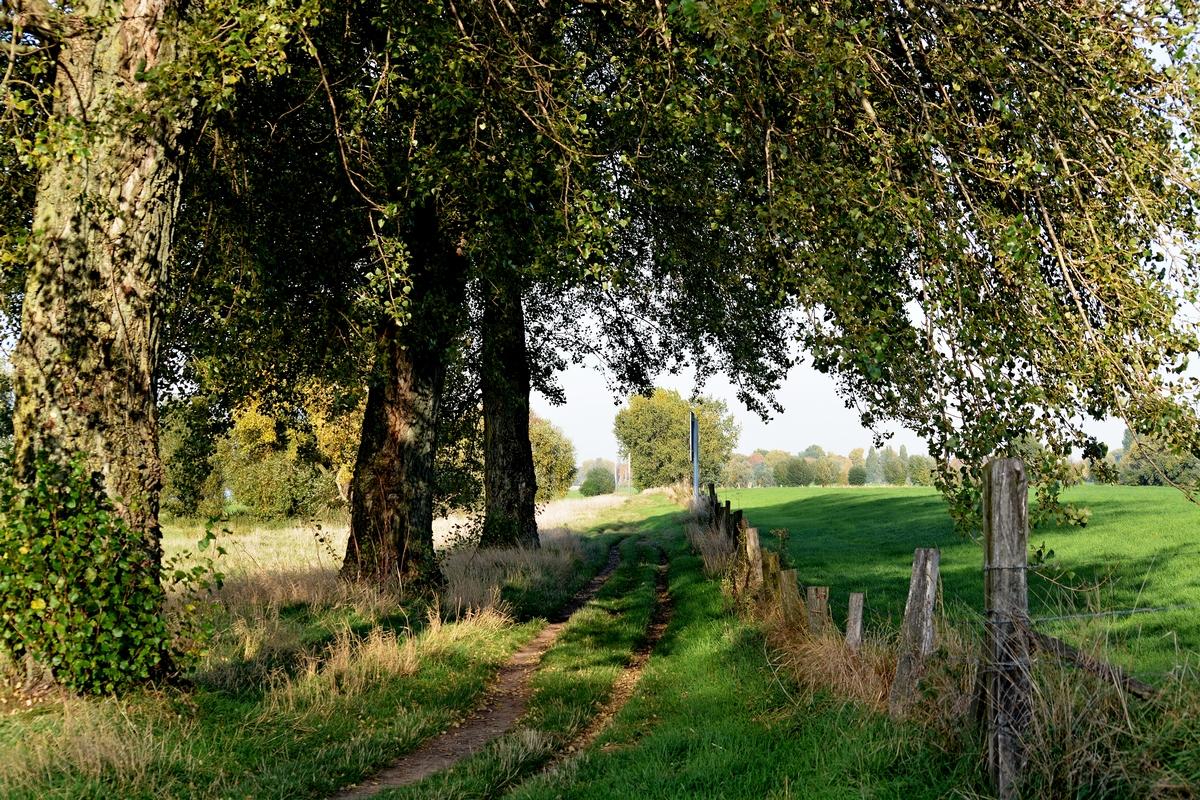 Der Weg am Rhein...