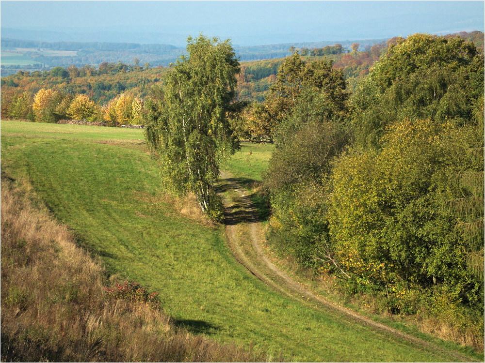 Der Weg an der Birke