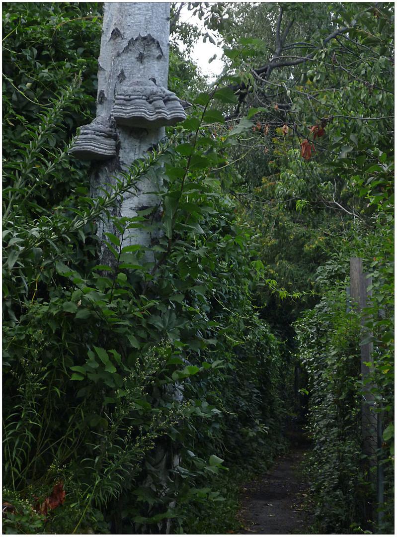 Der Weg der Elefanten