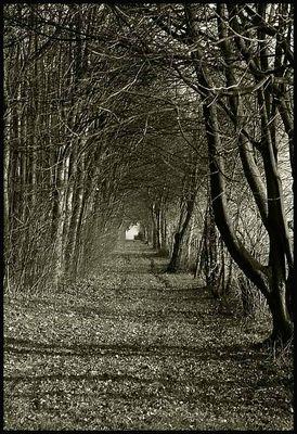 Der Weg des Lebens