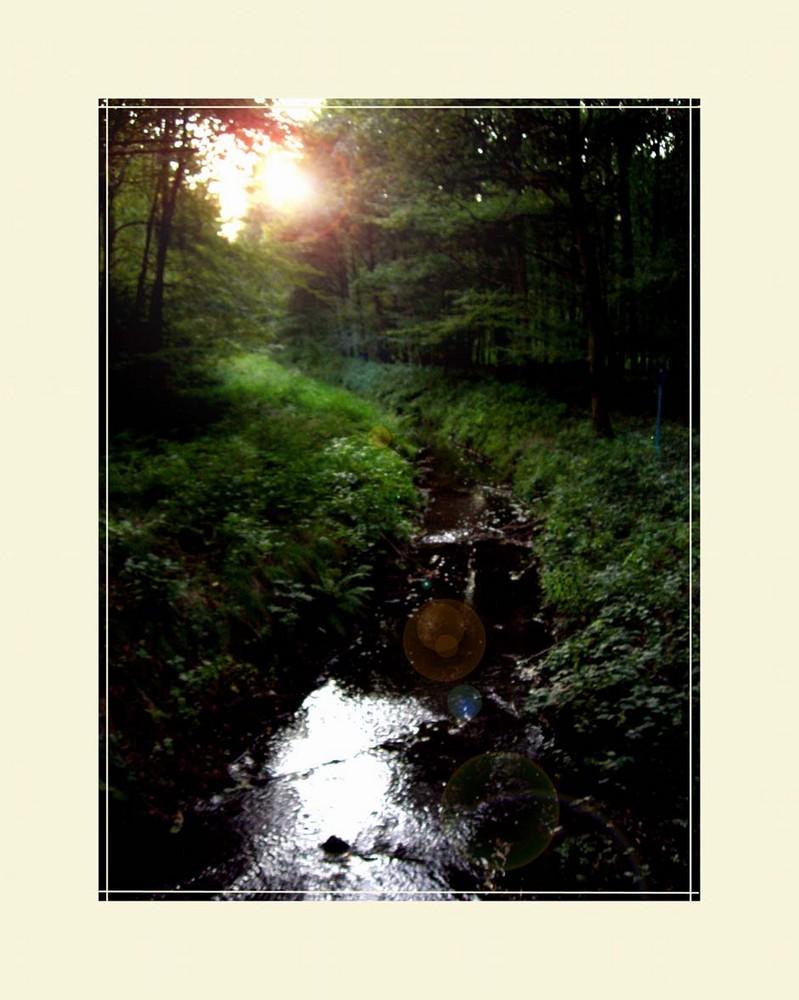 Der Weg des Wassers