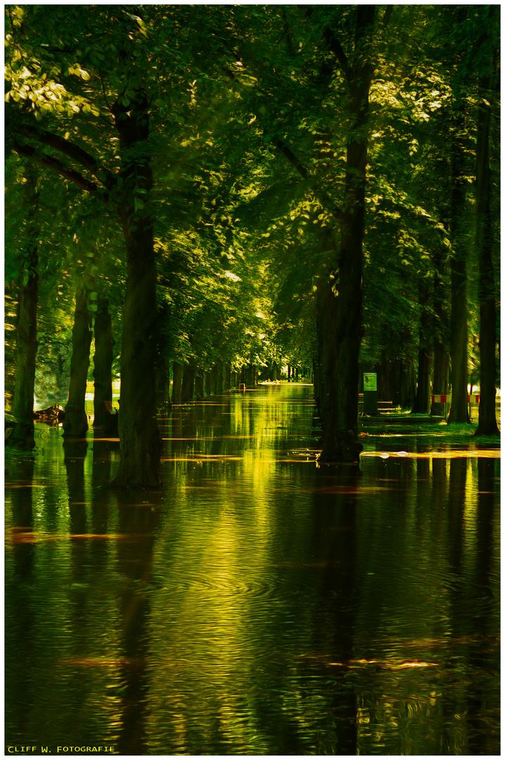 Der Weg durch Wald und Wasser.