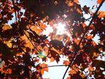 Der Weg durchs Blätterdach