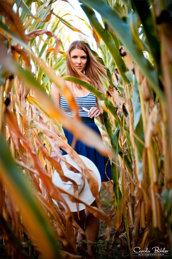 der Weg durchs Maisfeld