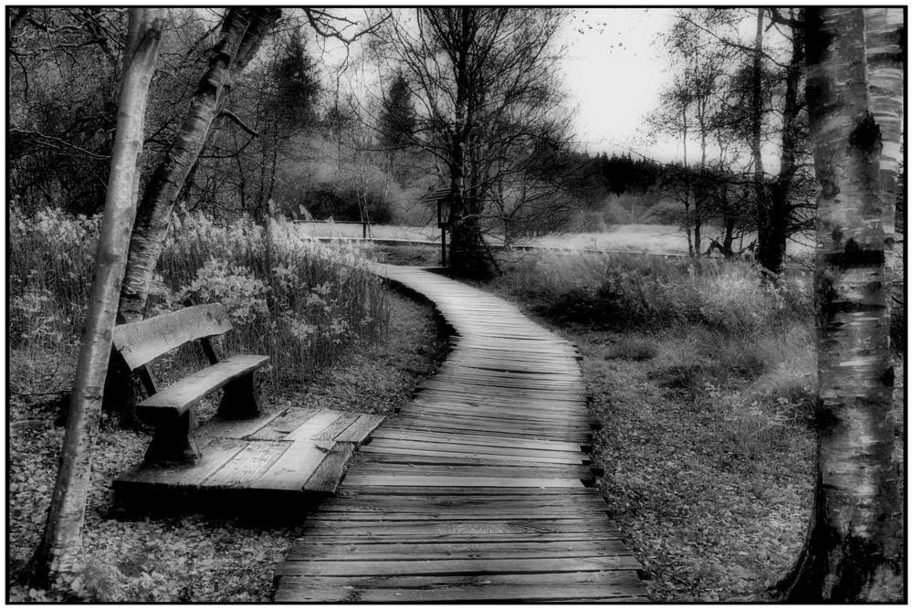 der Weg durch`s Moor s/w