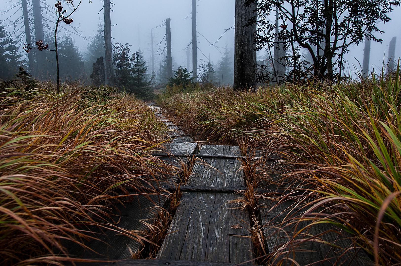 Der Weg im Nebel