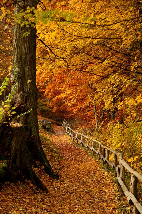 der Weg in den Herbst
