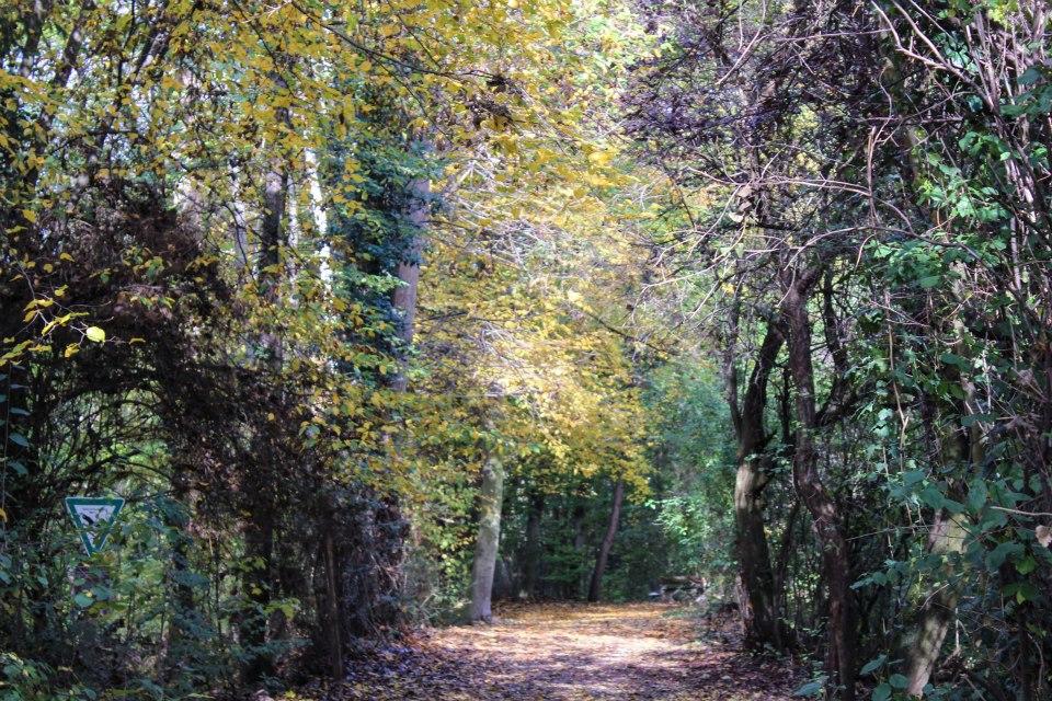 Der Weg in den Zauberwald......