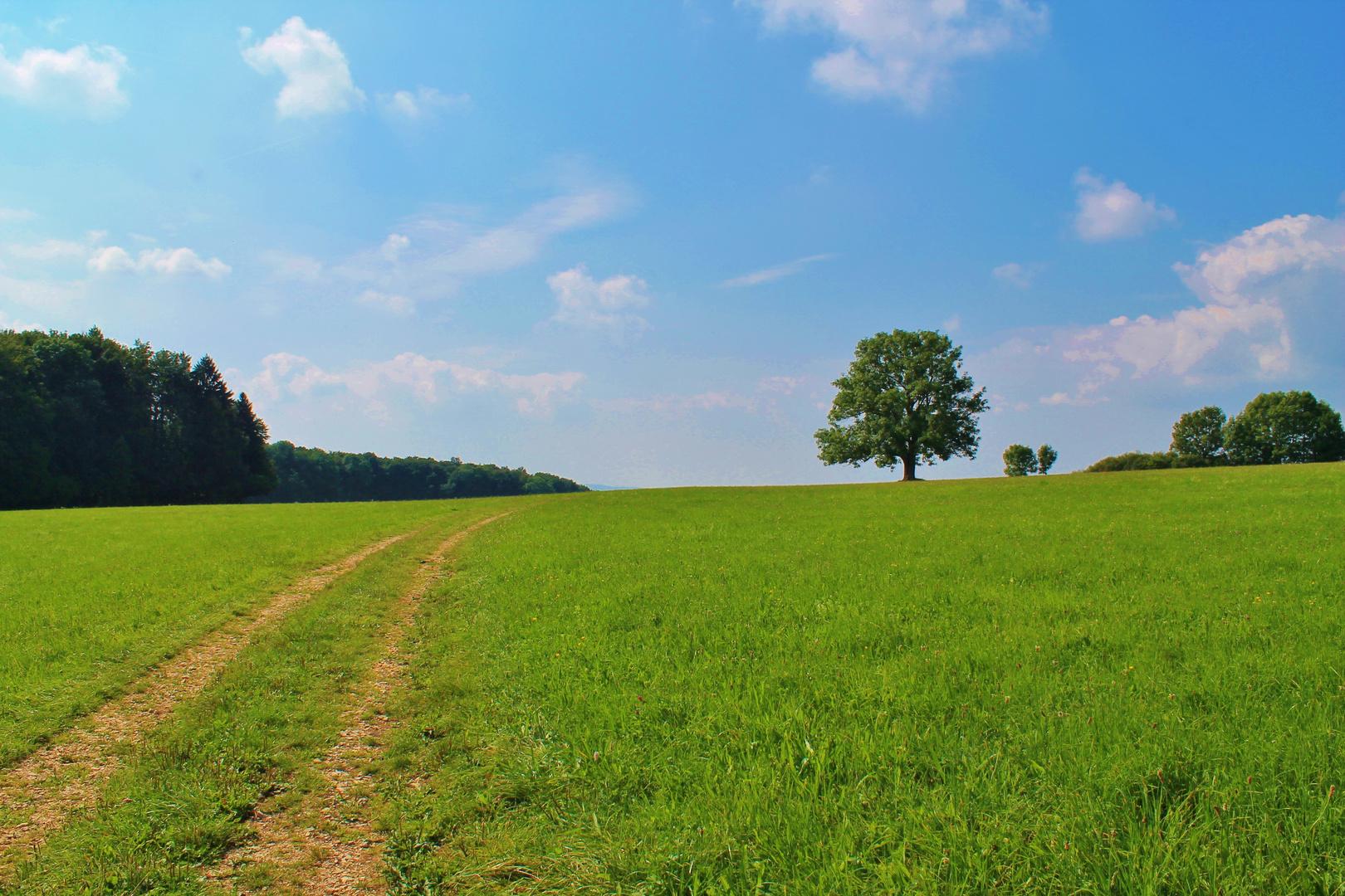 Der Weg ins Glück