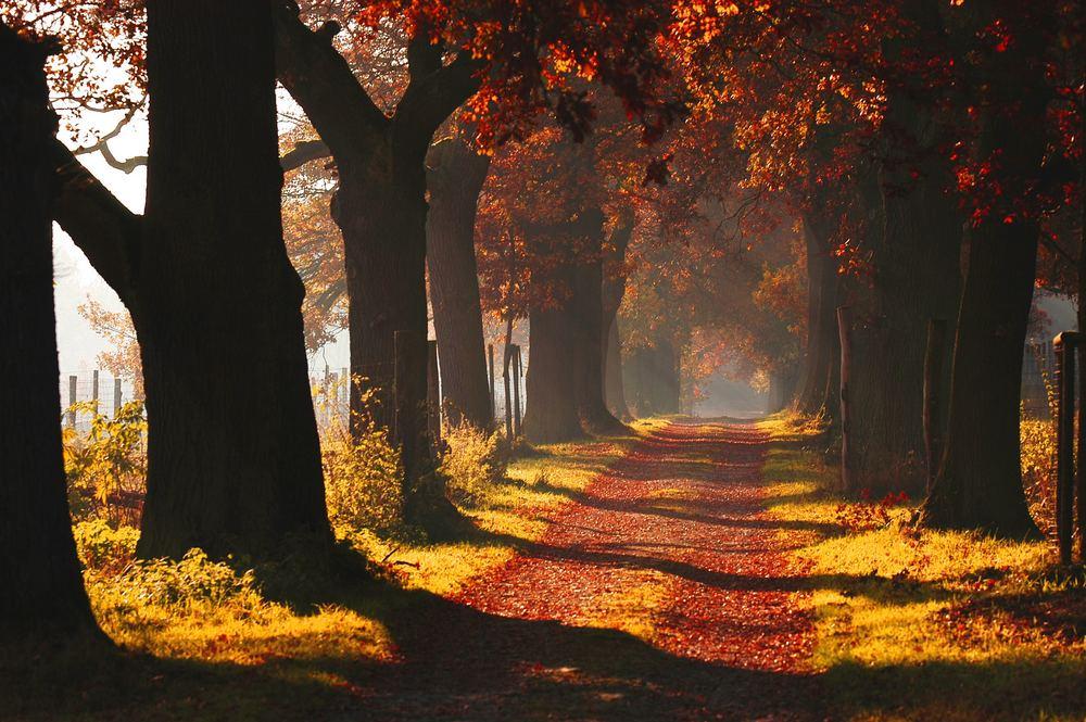 der Weg ins Glück,beginnt im Herzen ;)
