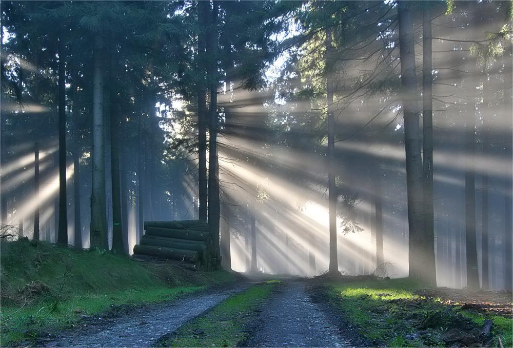 Der Weg ins Licht....