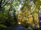 Der Weg ins Licht im Walde ...