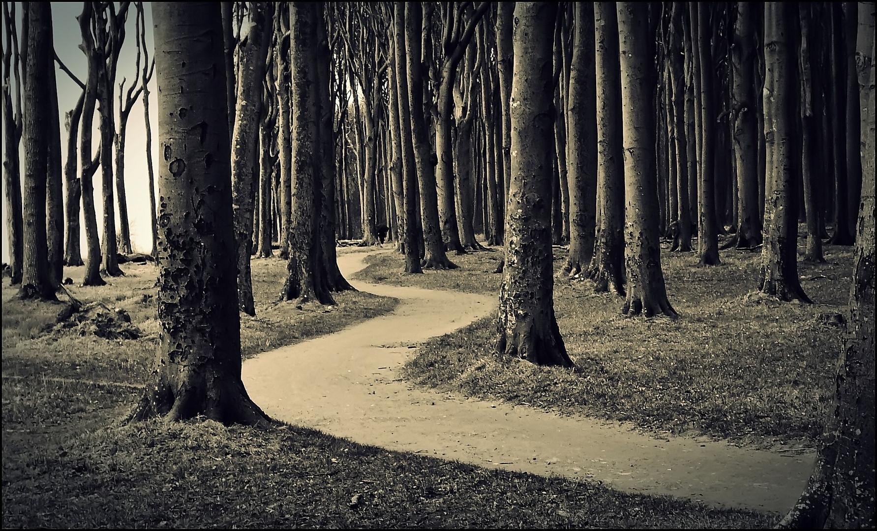 der weg ist das ziel foto amp bild natur wege und pfade