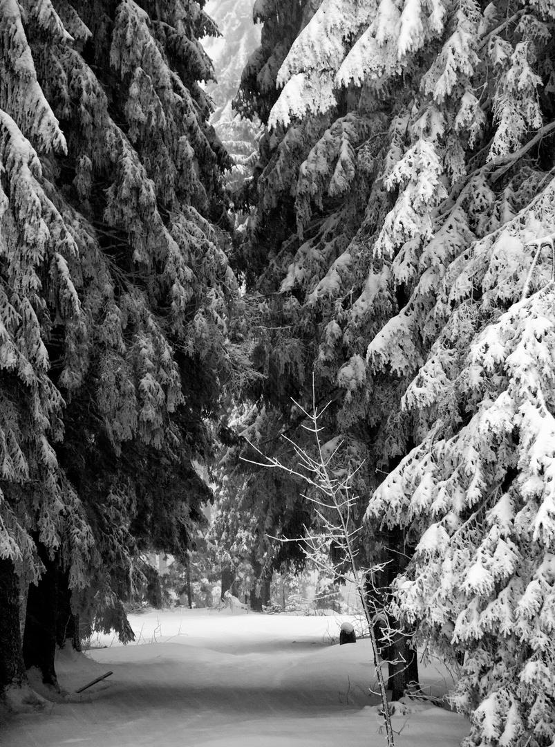 Der Weg nach Obertal