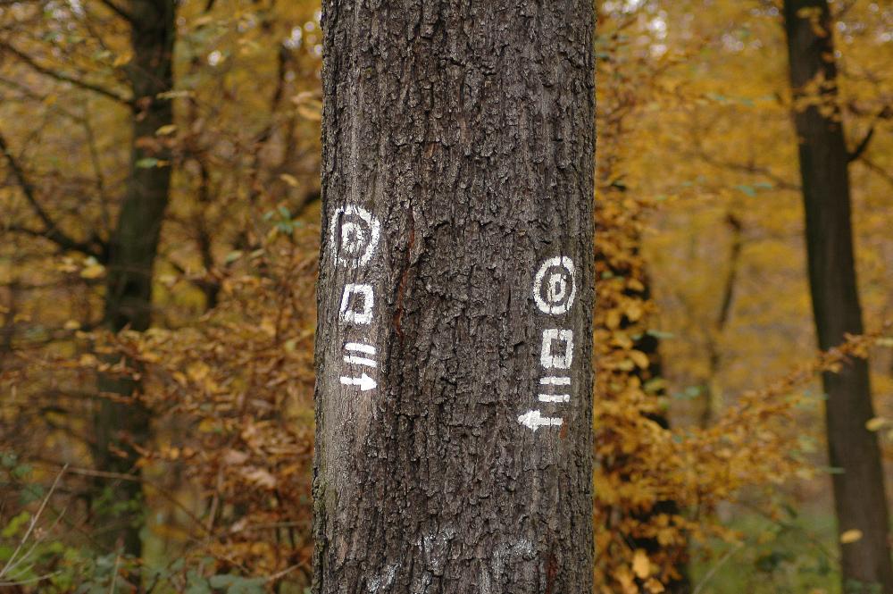 Der Weg um den Baum rechts oder links herum ist gleich ?