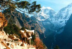 Der Weg zum Everest- Basecamp