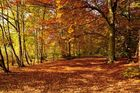 Der Weg zum goldenen Oktober.