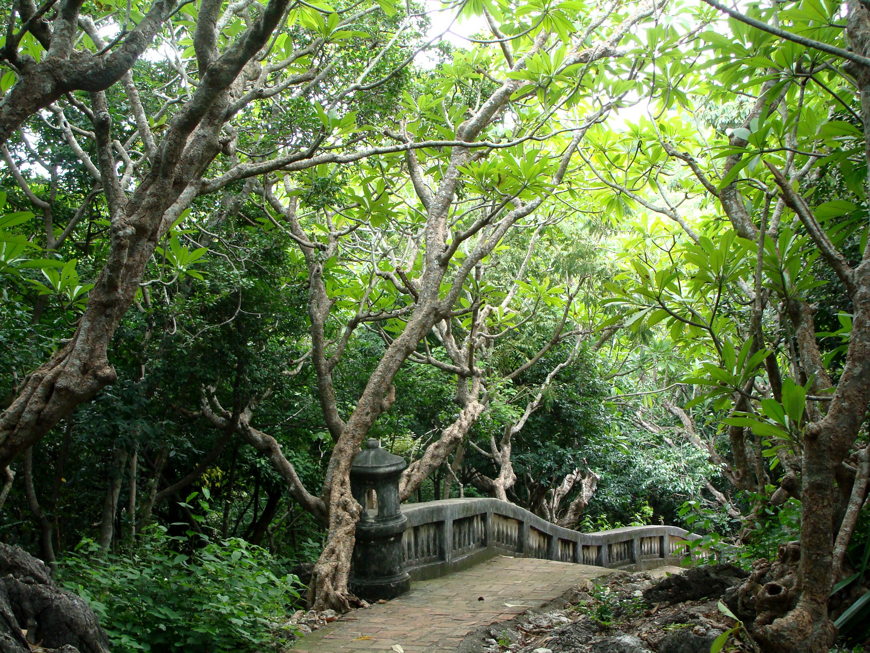 Der Weg zum Tempel