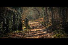 Der Weg zur alten Weide