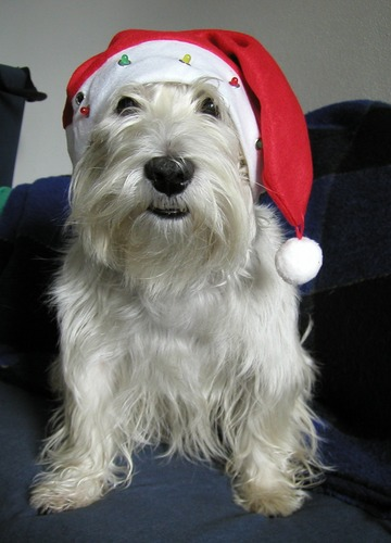 Der Weihnachstmann!