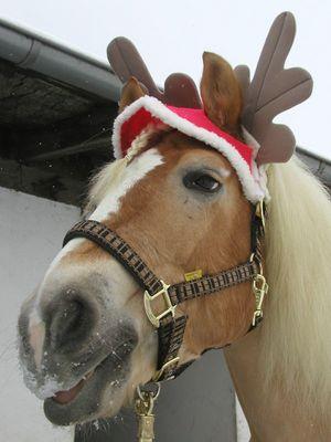 Der Weihnachts Elch