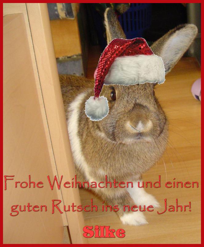Der Weihnachtshasi kommt!