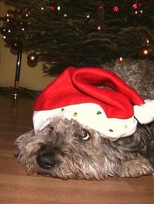 Der Weihnachtsmann ist doch ein armer Hund ...!