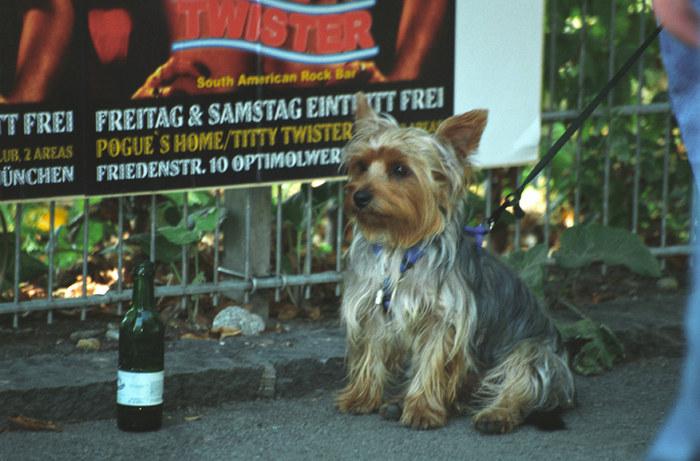 Der Wein und der Hund