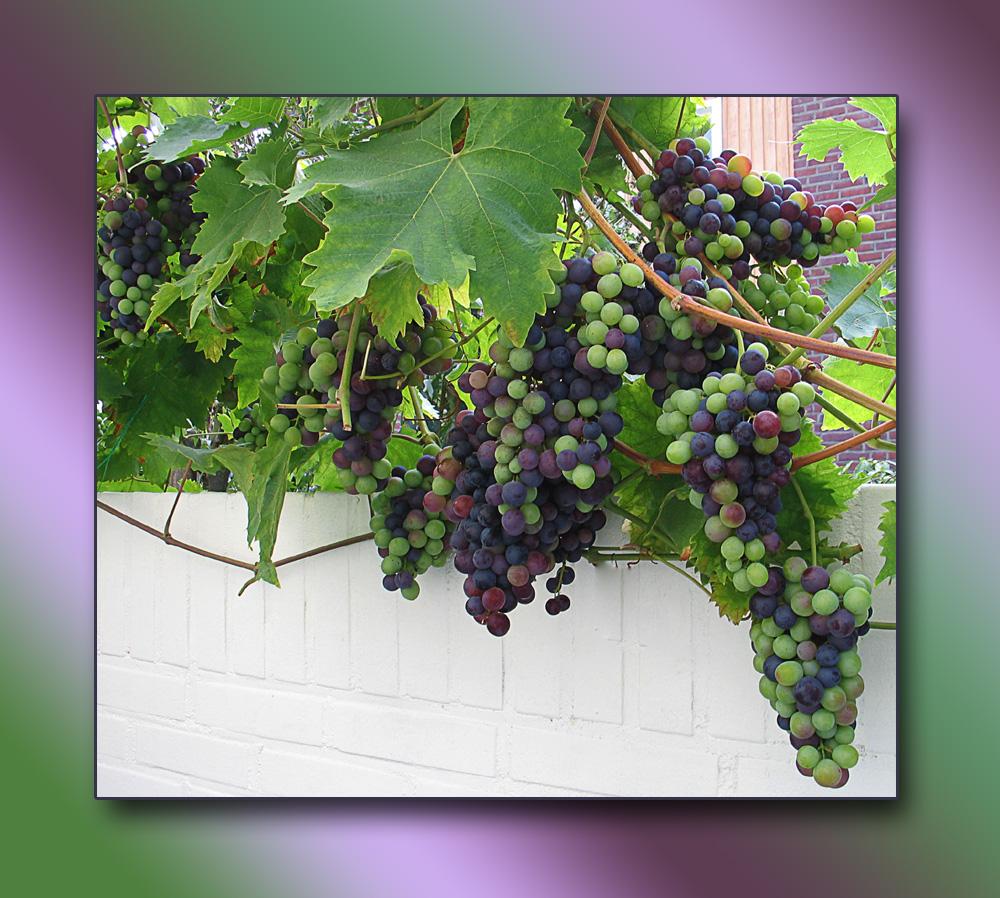 Der Wein von Morgen