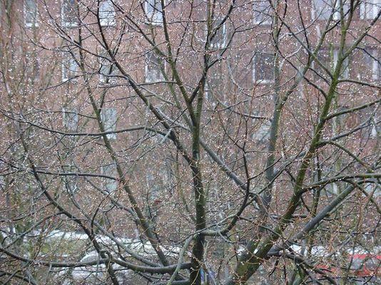 Der weinende Baum