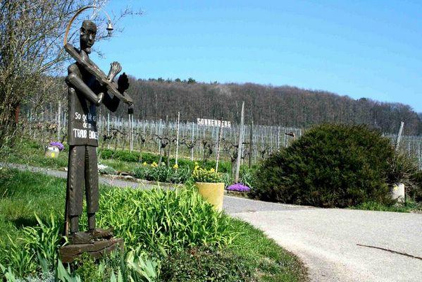 Der Weinlehrpfad
