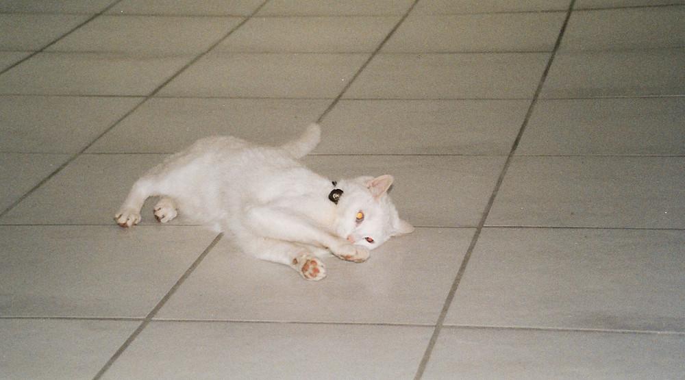 Der weiße Panther