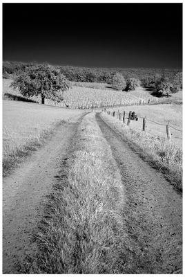 Der weite Weg…